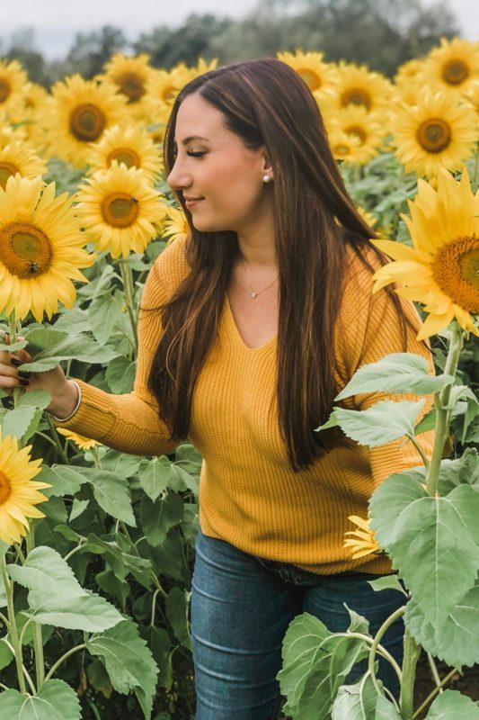 Sunflower Fields LRH
