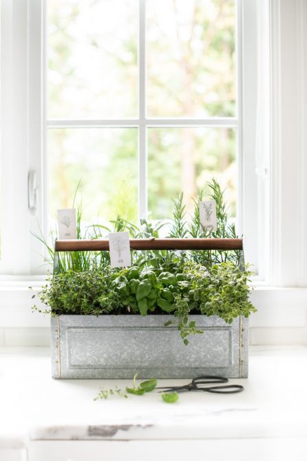 grow a successful indoor herb garden